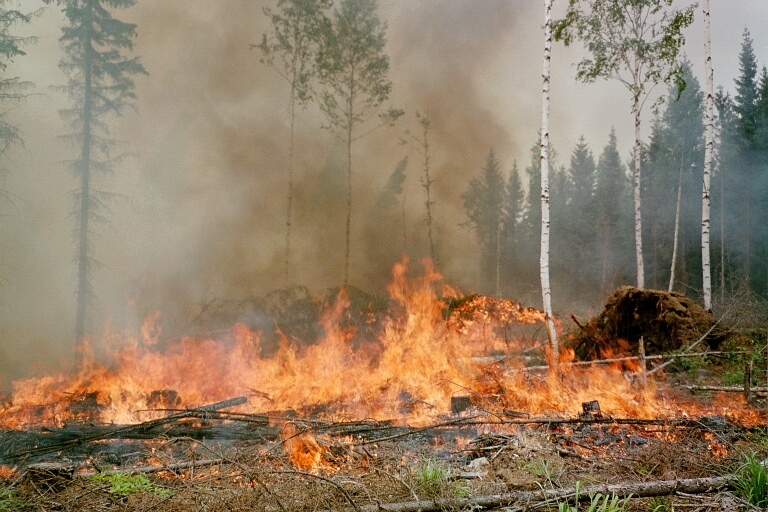 slash and burn method environmental science Dynamics of aggregate stability in slash-and-burn system: relaxation time, decay environmental dynamics in the slash-and-burn disruptive method.